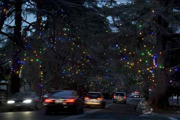 TADENA >> ... - How The Famous Trees Of Altadena's Christmas Tree Lane Were Saved In